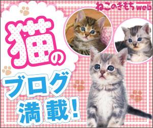 猫のブログ満載!「ねこのきもちweb」