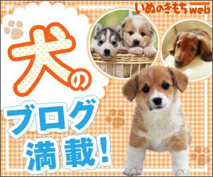 犬のブログ満載!「いぬのきもちweb」