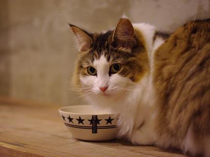 猫の餌の与え方と選び方
