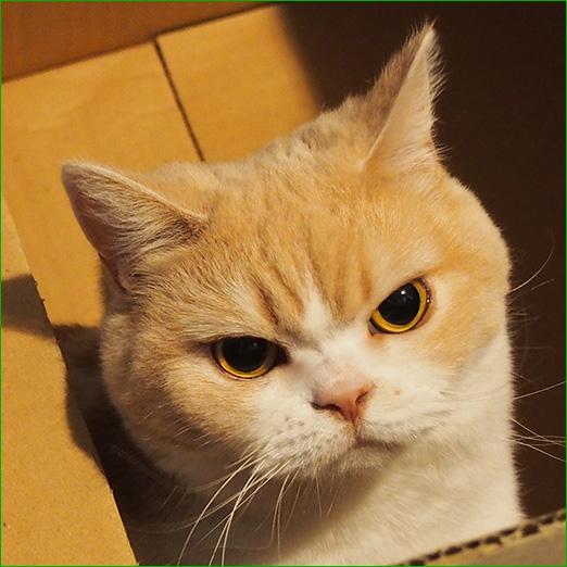 OSXのウプデータンが出てるよ(;´Д`)ハァハァ 【104】 [転載禁止]©2ch.netYouTube動画>11本 ->画像>1192枚