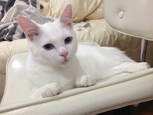 プライバシーの侵害よっ「残念なイケメン猫 揺るぎなきセツSTYLE」
