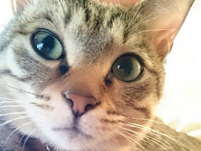 猫も花粉症に!我が家のニャンズは?