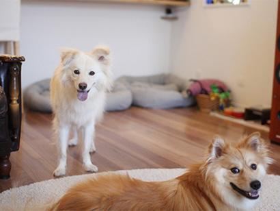 検証、犬は人の体調を気遣うか?