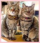 二匹の猫の画像