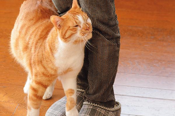 【ネコ】ネコが体を執拗に擦りつけてくる時って何考えてる????