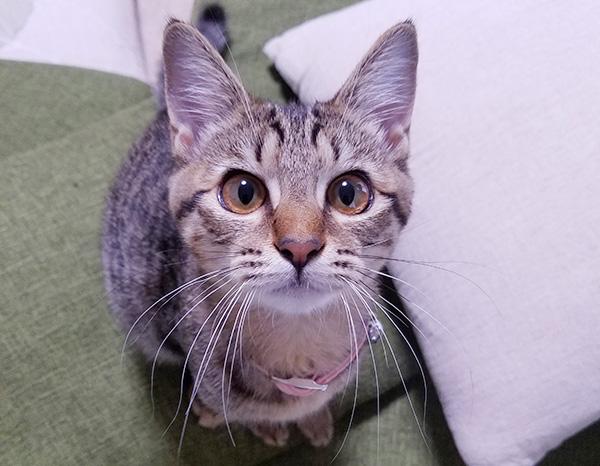 愛猫の平熱が何度か、飼い主さんはちゃんと把握していますか? 平熱を知っておくことで、体調に異変があるかどうかに気づくことができます。