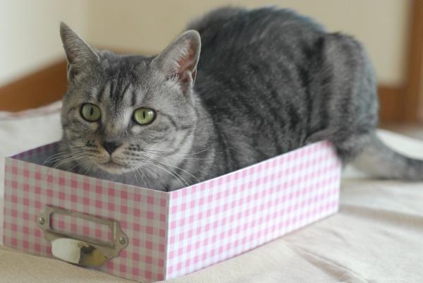 サバトラ猫写真