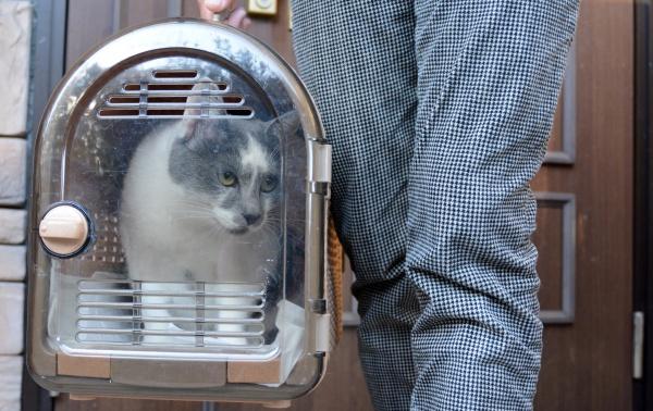 출처 : 개의 기분 고양이의 기분